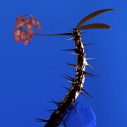 Weekend by Flume feat. Moses Sumney